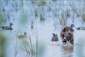 Texas Hunters Brace for Hot Teal Season Opener
